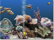 marine-aquarium
