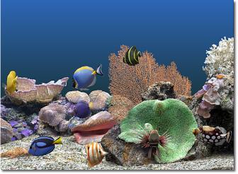 marine-aquarium2